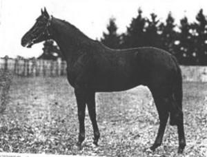 Horse_alchimist_2