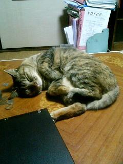 岡山の猫です